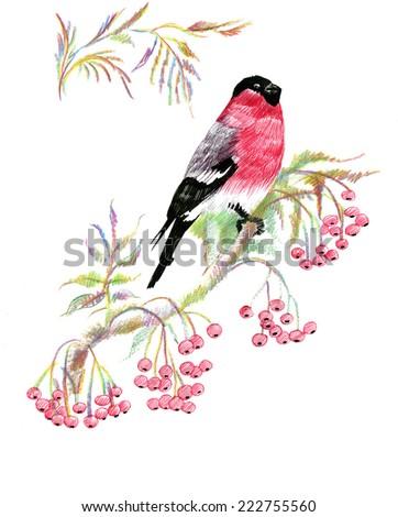 Bullfinch bird on a branch vector illustration - stock vector