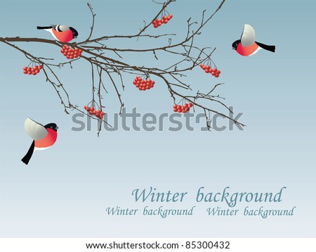Bullfinch on the branch. Vector illustration. - stock vector