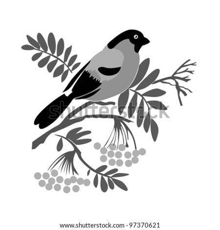 bullfinch silhouette on rowanberry branch, vector illustration - stock vector