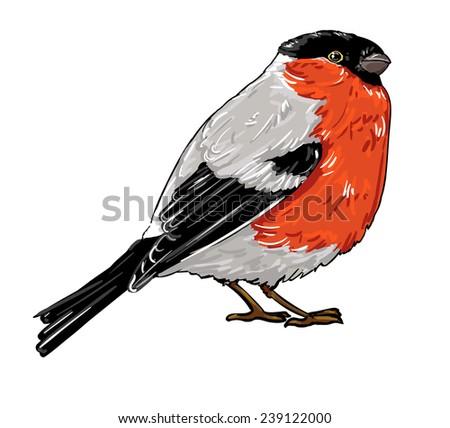 bullfinch  vector illustration isolated bird - stock vector