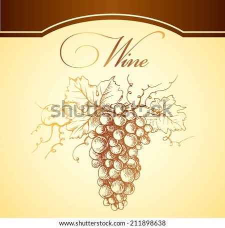 Bunch of grapes for label of wine.wine,  wine grapes,  grapes isolated,  vineyard,  fruit,  grapefruit,  grape vine
