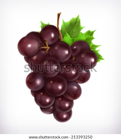 Bunch of grapes, vector illustration - stock vector