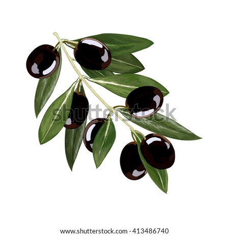 bunch of olives on the branch