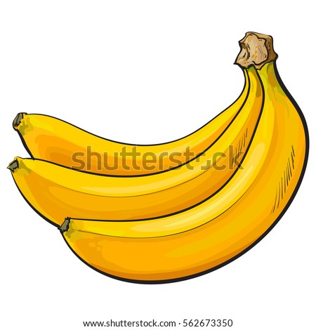 Bunch Of Three Unpeeled Ripe Bananas Sketch Style Vector Illustration Isolated On White Background