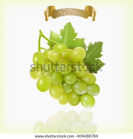 Bunch of yellow or green grapes with vine leaves isolated on white background. Cluster of grape. Realistic, fresh, natural food, dessert. 3d vector illustration for agriculture design.Green fruit.