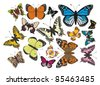 Butterflies - complet vector - stock vector
