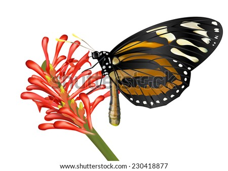 Butterfly and flower - vector
