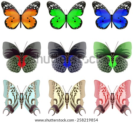Butterfly. Colored set. Vector Illustration on white background.