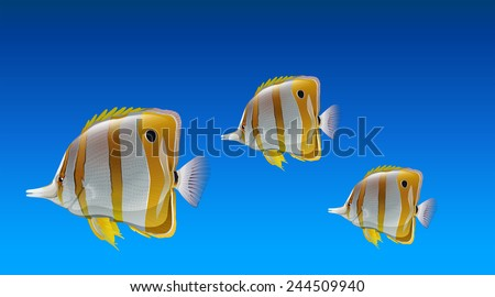 Butterfly fishes under the sea