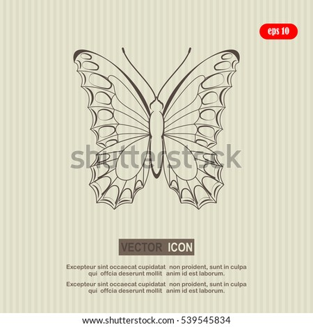 Butterfly isolated, vector illustration