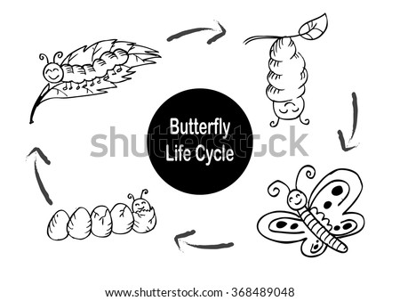 Owl butterfly life cycle - photo#25