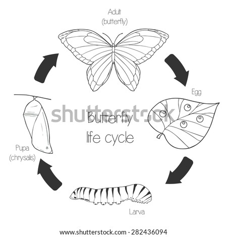 Butterfly Life Cycle Stock Images, Royalty-Free Images & Vectors ...