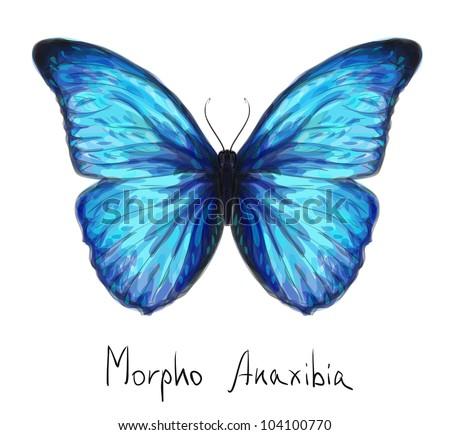 Butterfly Morpho Anaxibia. Watercolor imitation. Vector illustration. - stock vector
