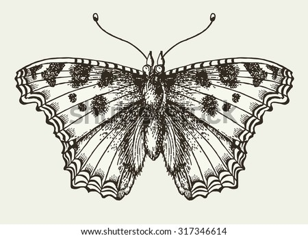 Butterfly, moth  isolated. Insect realistic. Fauna nature. Poster. Engraving, drawing. Freehand drawing. Vintage vector stock Victorian style illustration.