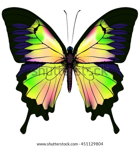 Butterfly. Orange green pink and yellow butterfly isolated illustration on white background. Nonexistent butterfly zoology specimen - stock vector