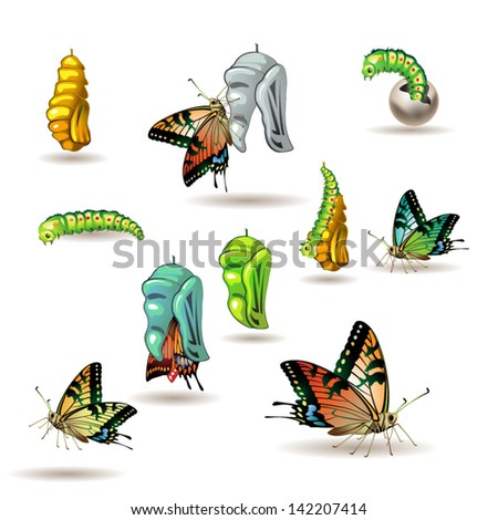Butterfly stages with cocoon on white background - stock vector