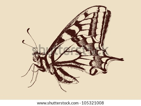 butterfly Swallowtail (Papilio machaon) drawn vector llustration - stock vector