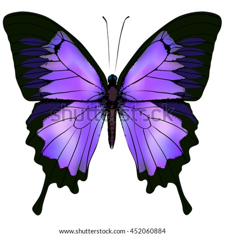 Butterfly. Vector illustration of beautiful pink and purple lilac violet butterfly isolated on white background - stock vector