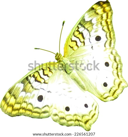 Butterfly - White Peacock - Vector Image