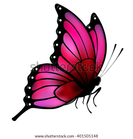 Butterfly with big pink wings on white background.  Illustration for posters, greeting and invitation cards, print and web projects. - stock vector