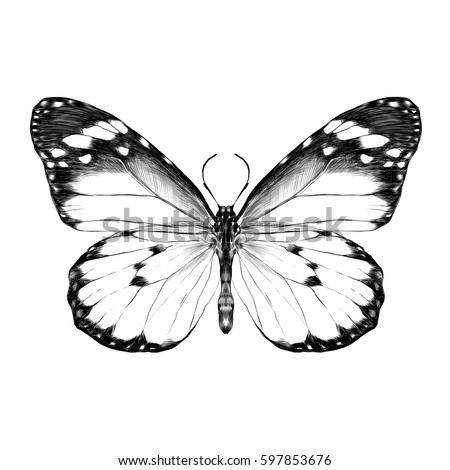 Butterfly Open Wings Top View Symmetrical Stock Vector ...