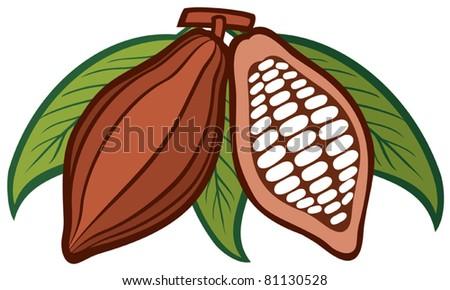 Cacao - cocoa beans - stock vector