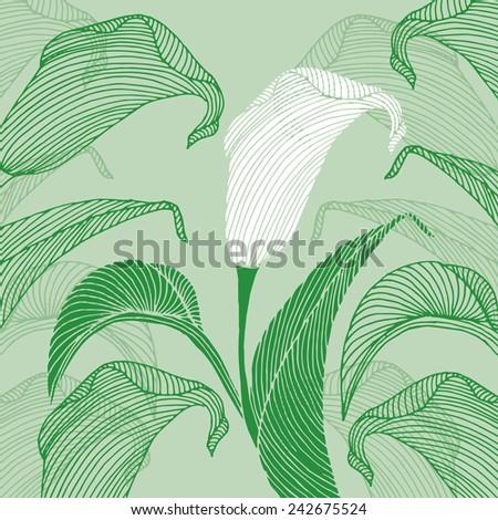 Calla flower - stock vector