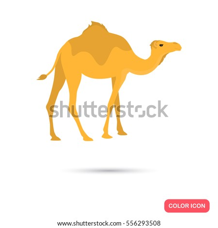 Camel color flat icon for web and mobile design
