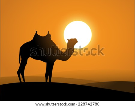 Camel  on the desert over the sunset vector - stock vector
