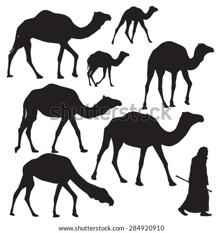 Camel Silhouette on white background - stock vector