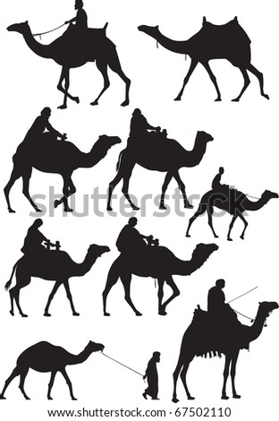Camel silhouettes. - stock vector