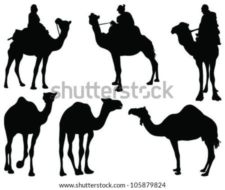 Camel silhouettes-vector - stock vector