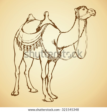 Camelus is hoofed enduring mammal with hump, baggage loaded to carry in wilderness. Vector outline freehand ink drawn background sketchy in art doodle antiquity style pen on paper with space for text