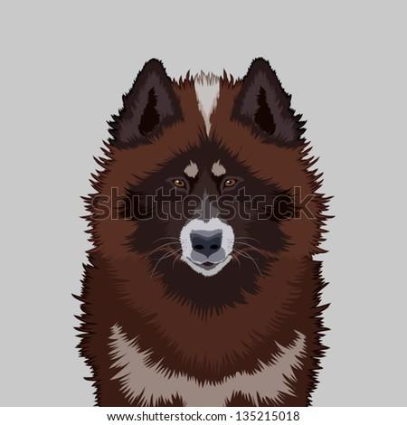 Canadian eskimo dog, The buddy dog - stock vector