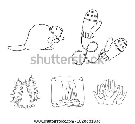 Canadian Fir Beaver Other Symbols Canada Canada Stock Vector