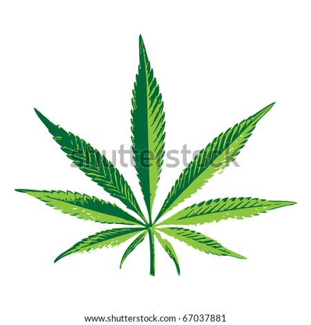 Cannabis leaf for your design, vector illustration