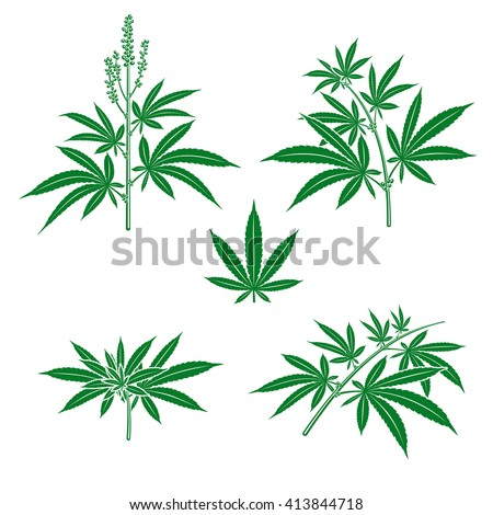 Cannabis, marijuana set. Vector - stock vector
