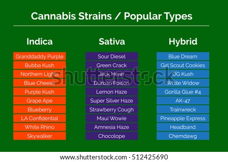 types of weed chart: Cannabis strains marijuana related info graphic stock vector