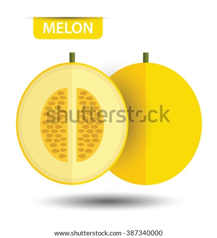 Cantaloupe melon, fruit vector illustration - stock vector
