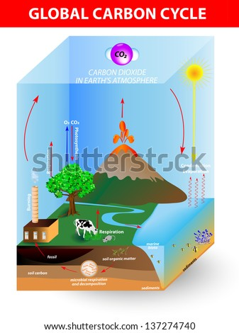 carbon cycle. Vector diagram shows the movement of carbon between land, atmosphere, and oceans - stock vector