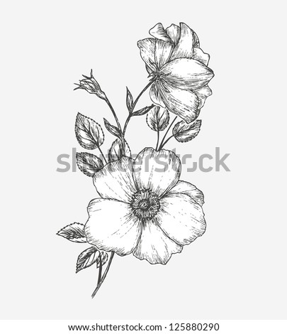 Card with dogrose flower. Wild rose - stock vector