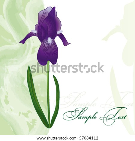 Card with iris - stock vector