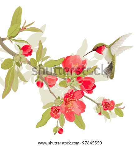 Card with sakura blossom and colibri - stock vector