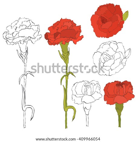 carnation flowers collection hand drawn inky carnation single flowers and branch isolated on white - Carnation Flower Colors