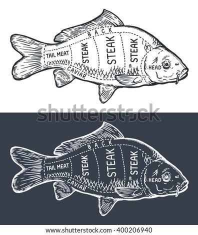 Carp engraving, cutting instruction diagram illustration, on chalkboard - stock vector