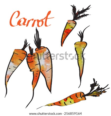 carrot - stock vector