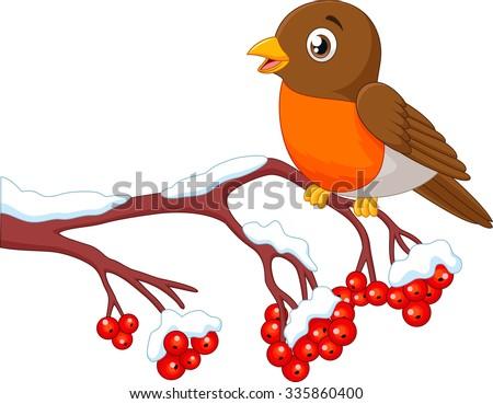 Cartoon beautiful robin bird posing on the berry tree - stock vector