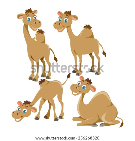 Cartoon Camels  - stock vector