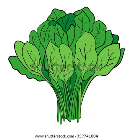 Cartoon illustration of a bundle of spinach - stock vector