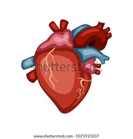 Cartoon illustration heart human internal organs stock vector cartoon illustration of a heart human internal organs vector illustration ccuart Gallery
